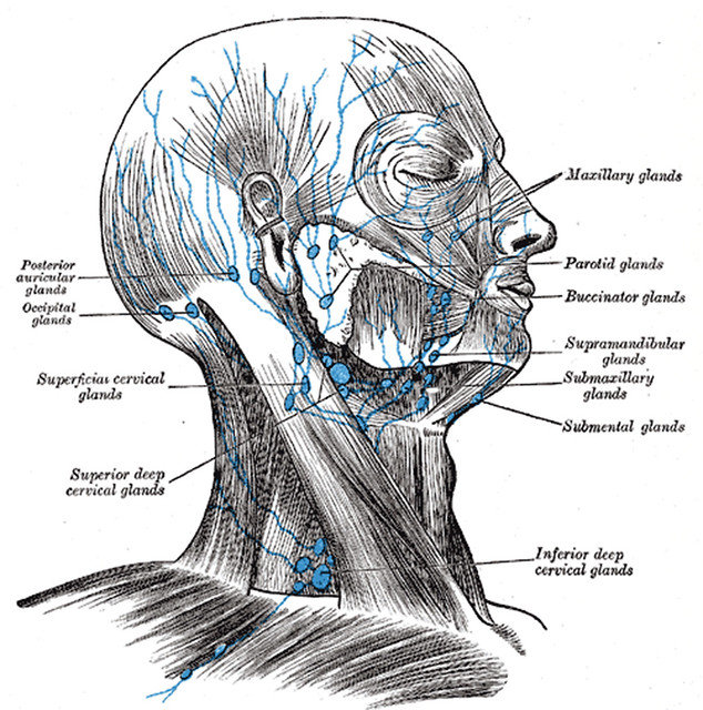 Lymph Nodes of the Head   www.bartleby.com/107/pages ...
