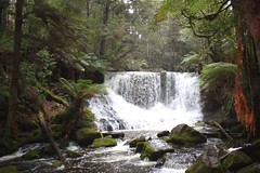 Russell Falls And Mt Field National Park Tour From Hobart
