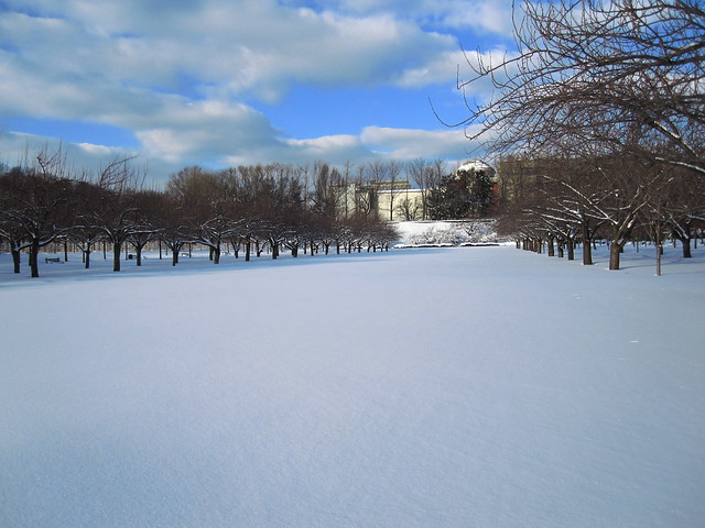 A pristine snow field on Cherry Esplanade. Photo by Rebecca Bullene.