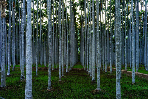 tree palm ashram india coimbatore tamil tamilnadu isha yoga center centre green voigtlander voigtlanderultron28mmf2