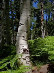 kachina peaks wilderness flagstaff, az