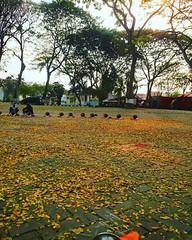 Cinta adalah kepingan berlian yang tak akan bisa kau singkirkan sembarangan seperti daun yang berguguran~ #repost Photo by @dwinovitaindri #alunalun #pendopo #serang #gubernur #kotaserang #fall #leave #season #Banten #Indonesia. http://bit.ly/1BFtNAa