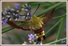 Insectes et macros