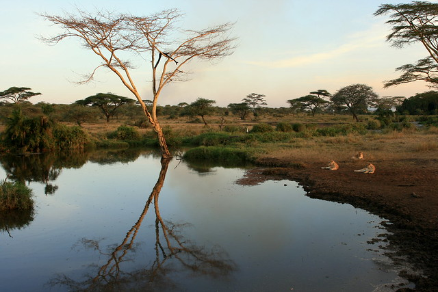 Serengeti 51