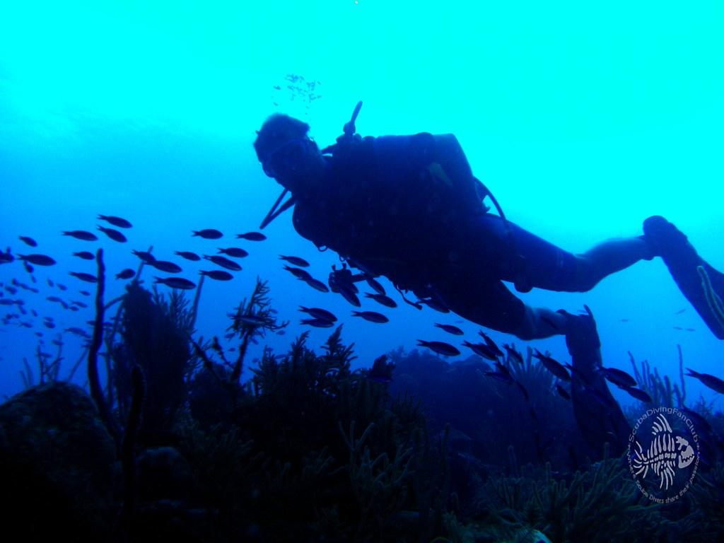 Scuba diving wallpaper free diving wallpapers - Porno dive video gratis ...