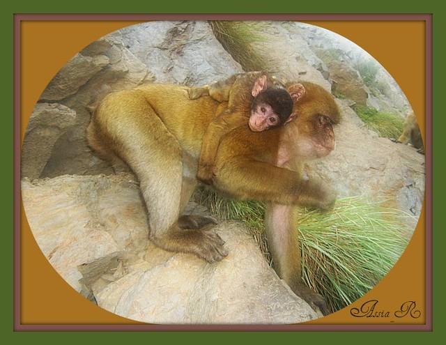 La maman portant son enfant sur son dos