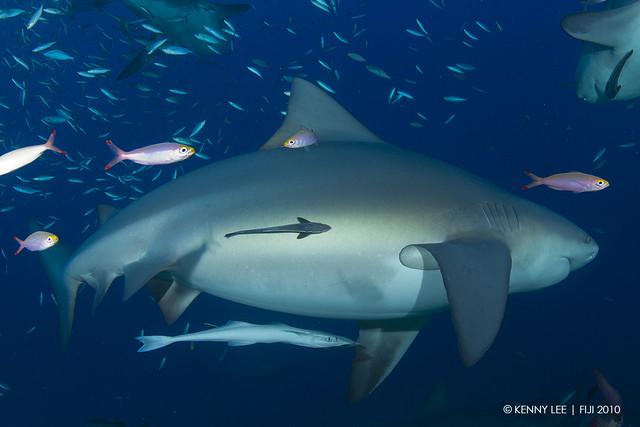 Pregnant Sharks - Mature Lesbian-8454