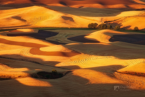 Golden Swirls Palouse