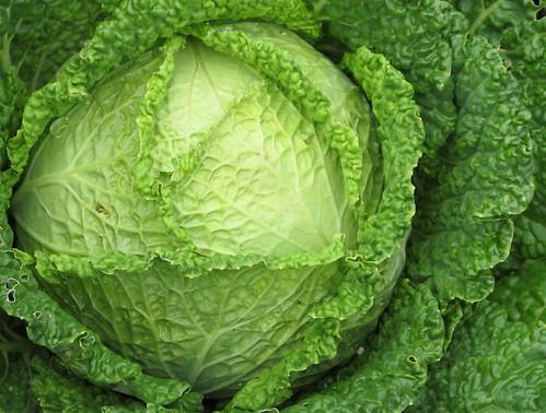 Savoy Cabbage Drumhead