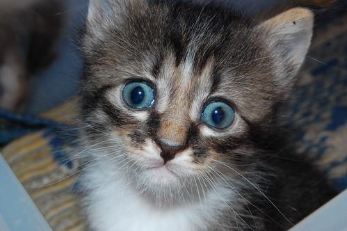 Comportamento felino - Petlove - O Maior Petshop Online do Brasil