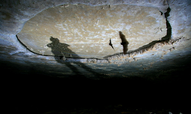 Shadow caver