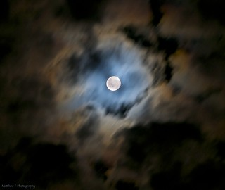 harvest moon (in calico)