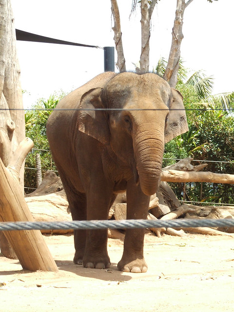 * Elephant * | Taken at Taronga Park Zoo, Sydney (NSW ...