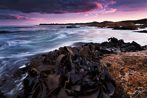 pink sunset seascape seaweed rock nikon shoreline kelp tasmania friendlybeaches d700
