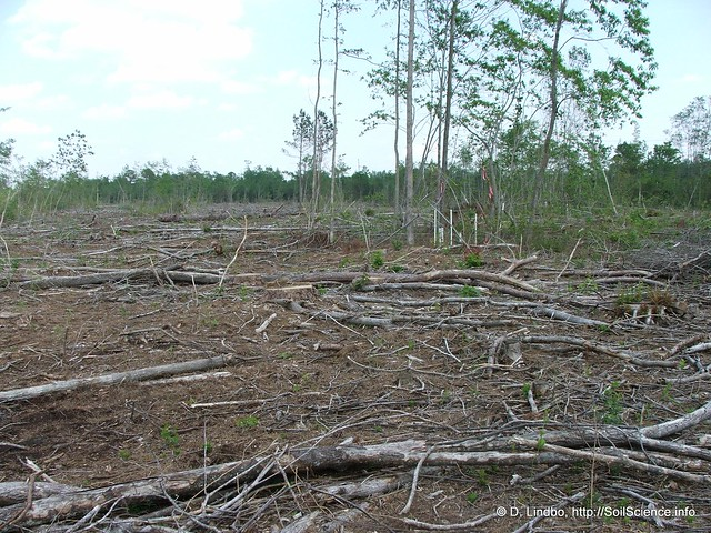 A forest cut over in north carolina 5 explore soil for South carolina soil