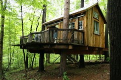 woodland, outdoor structure, hut, wood, tree, shack, nature, cottage, forest, log cabin, tree house, wilderness, jungle, rural area,