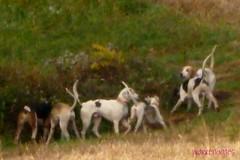 The Saxonburg Hunt