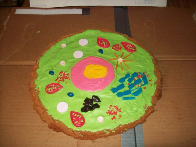 Cross Section Of An Animal Cell http://www.flickr.com/photos/missy_j79/5101430342/
