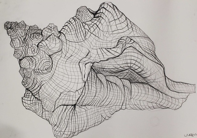 Contour Line Drawing Shell : Life drawing i fall shell drawings a gallery on