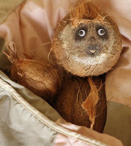 Three-Toed Coco Sloth