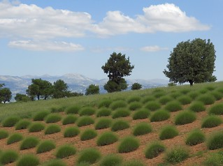Turkey (Isparta) Another view from lavender fields