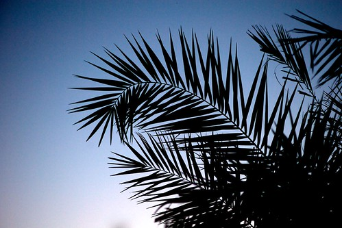 morning sky plant nature silhouette sunrise georgia twilight flora outdoor kingsland project365 242365