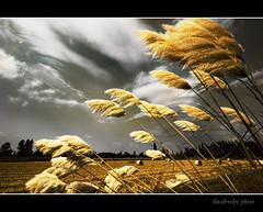 Paesaggi padani