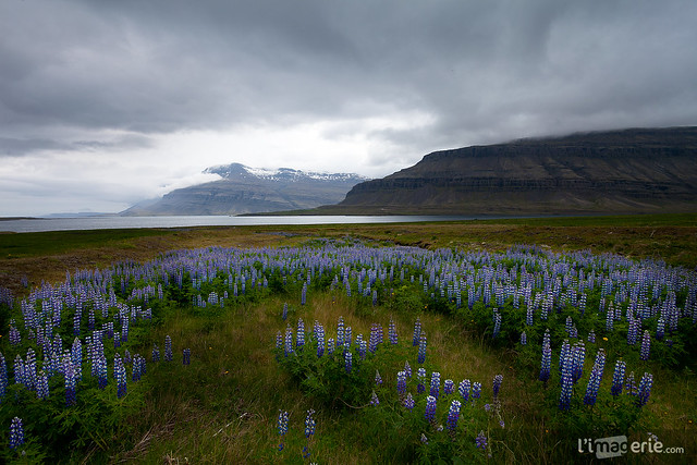 East Fjords - E. Iceland