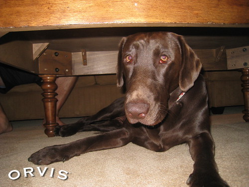 Orvis Cover Dog Contest - Buster K