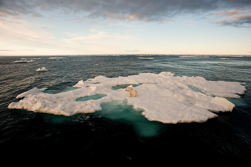 mother and cub on seaice wideangle