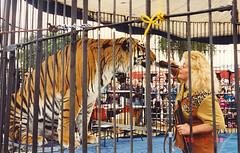 Sarasota - Animal Trainer in Circus