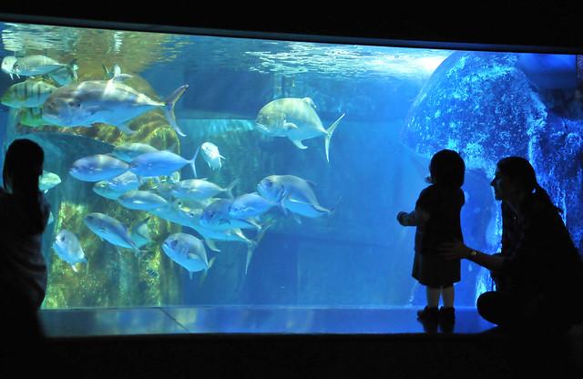 London Aquarium Flickr Photo Sharing