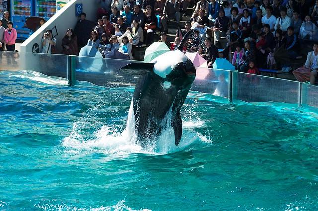 killer whale #19