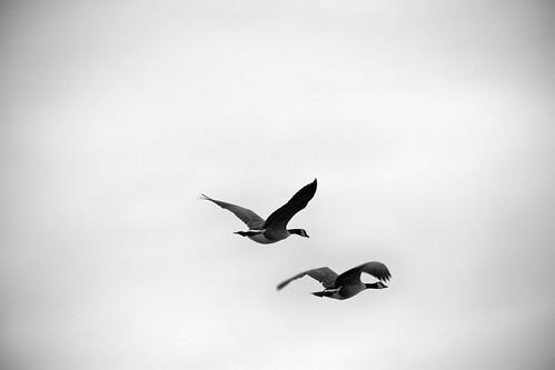 wild geese poem analysis