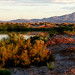 Small photo of Ash Meadows NWR
