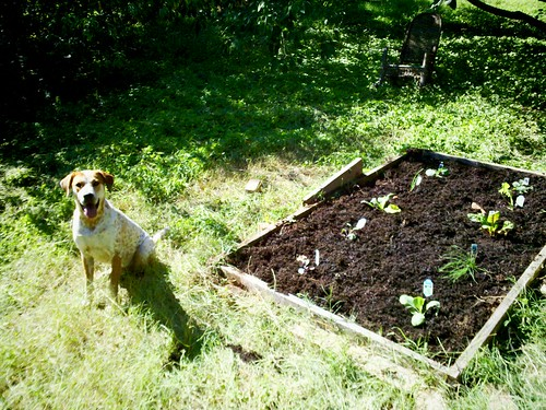 Dog vs Garden - Year II
