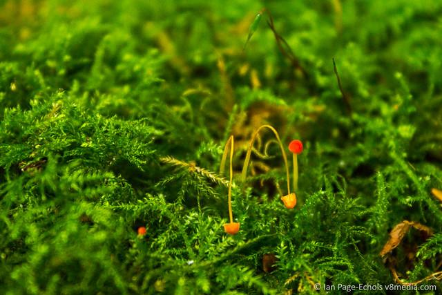 Orange micro mushrooms