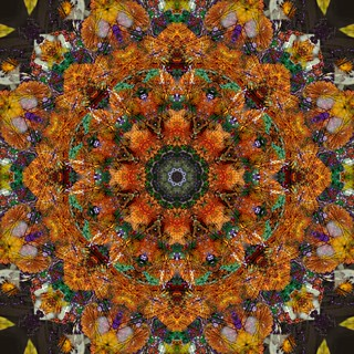 Mandala Thirty Seven - For the Birds