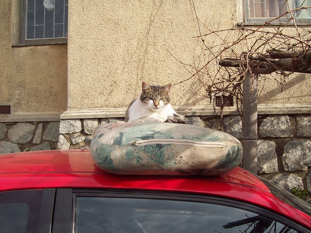 cat with car II