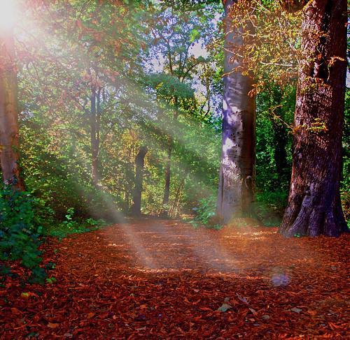 wood fall forest automne nikon path foret chemin bois malou woluwe 50faves fantasticnature mywinners woluwesaintlambert d40x vanagram chateaumalou
