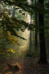 Forest Morning, Gorinsee, Brandenburg, Germany