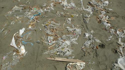 我畫了一公尺平方公尺的沙灘,想看看到底有多少塑膠袋。在這一平方公尺沙灘上,撿起大小塑膠袋53個。
