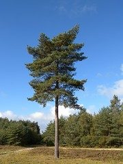 larch, tree, plant, meadow, biome, temperate coniferous forest, spruce,