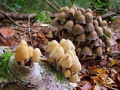 tree(0.0), agaric(0.0), oyster mushroom(0.0), bolete(0.0), matsutake(0.0), penny bun(0.0), hen-of-the-wood(0.0), champignon(0.0), autumn(0.0), pleurotus eryngii(1.0), medicinal mushroom(1.0), agaricus(1.0), nature(1.0), mushroom(1.0), agaricaceae(1.0), flora(1.0), fungus(1.0), forest(1.0), edible mushroom(1.0),
