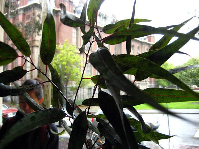 Foto: Citroen Eucalyptus