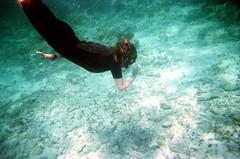 marine biology(0.0), diving(0.0), underwater diving(1.0), swimming(1.0), sports(1.0), recreation(1.0), outdoor recreation(1.0), water sport(1.0), underwater(1.0), freediving(1.0), reef(1.0),