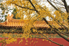 Autum Colors of Nanjing
