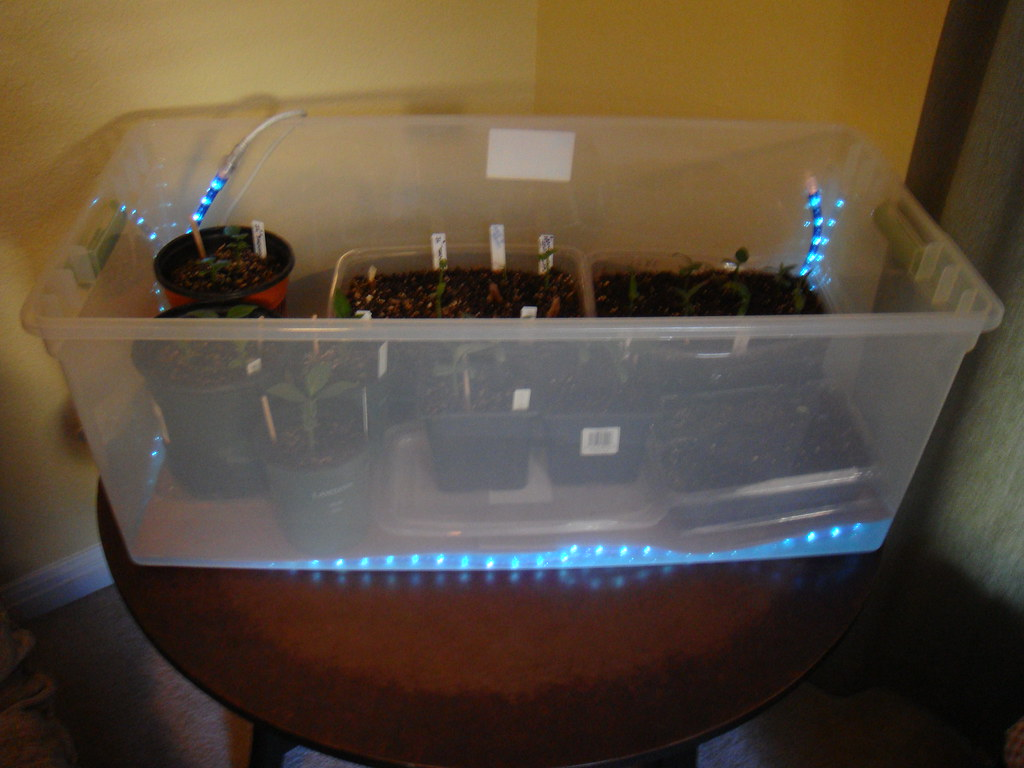 My Seedling Set-up