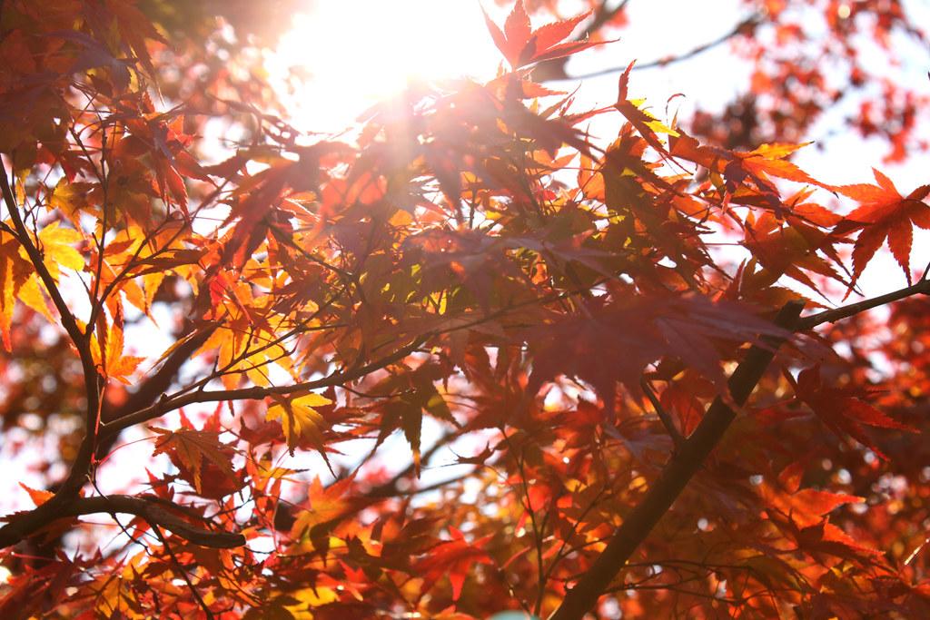 明治村×紅葉