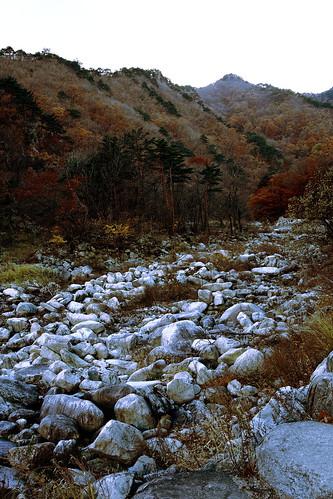 El otoño me volvió paisajista II
